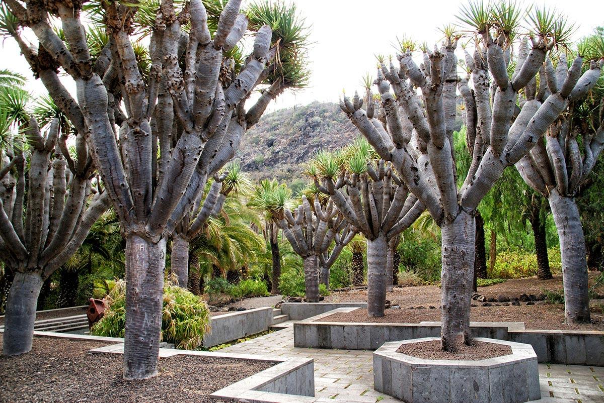 Gran Canaria –  ogród Jardín Canario