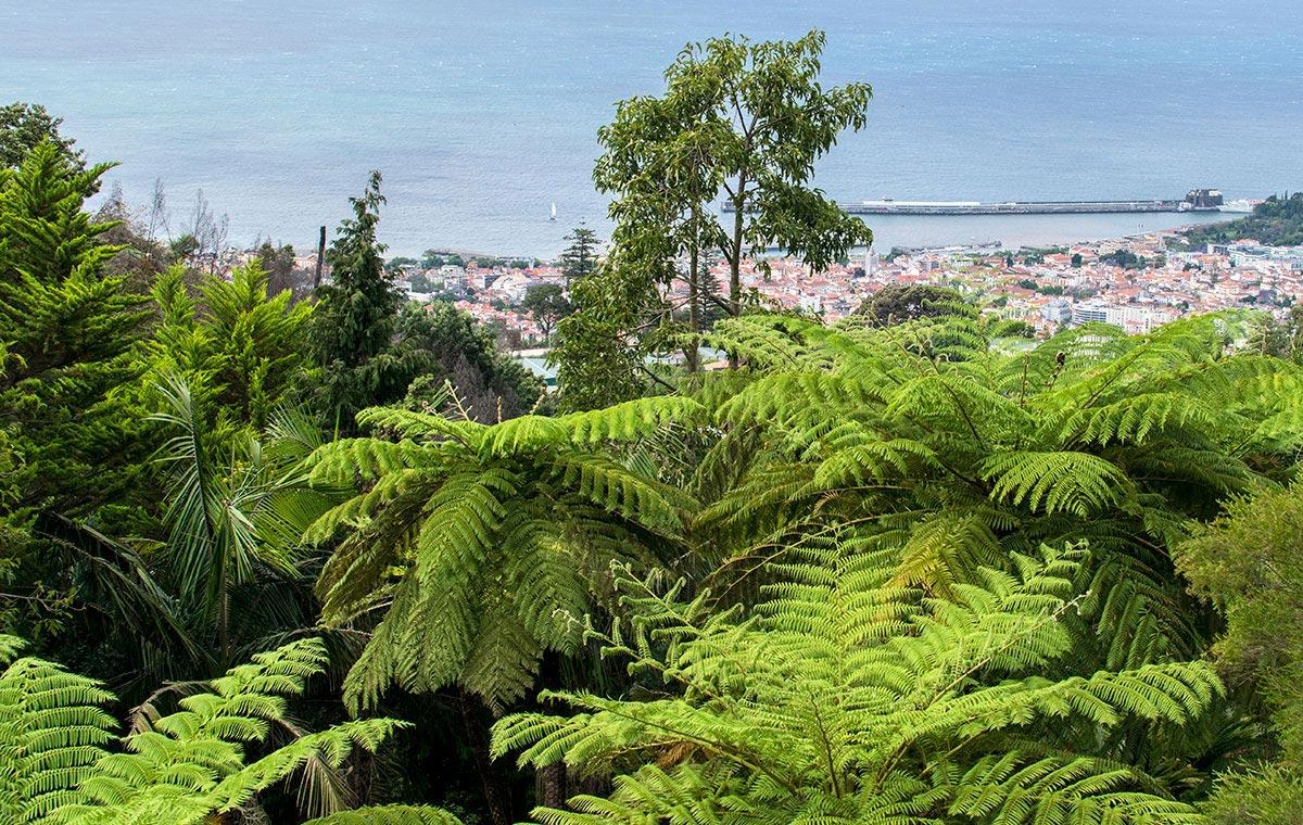 Madera – tropikalny ogród w Monte